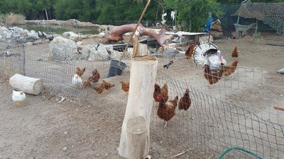 rachelvonfleck-reelcamogirl-birds-yard