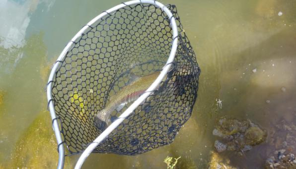 3vonfleck-trout-rubber-net.png