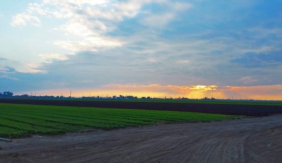 rachel-von-fleck-sunsets-pheasant-hunting