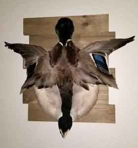 rachel-von-fleck-diy-duck-mount