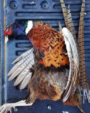 rachel-von-fleck-pheasant-hunting